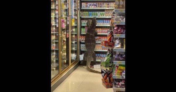 O șopârlă uriașă a intrat într-un magazin din Thailanda și a escaldat rafturile