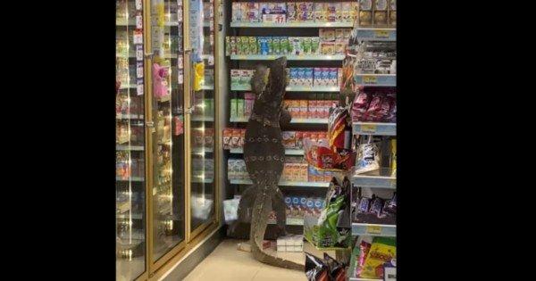 VIDEO // O șopârlă uriașă a intrat într-un magazin din Thailanda și a urcat pe rafturi