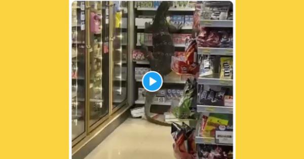 (VIDEO) Godzilla este real? O șopârlă uriașă a terorizat angajații unui supermarket din Thailanda