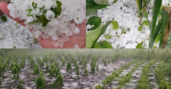 Peste 500 de hectare de livezi și culturi agricole au fost distruse de ploi în raioanele Ungheni și Soroca