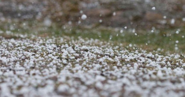 Ploile abundente fac ravagii pe terenurile agricole: Zeci de ha de livezi, distruse de grindină