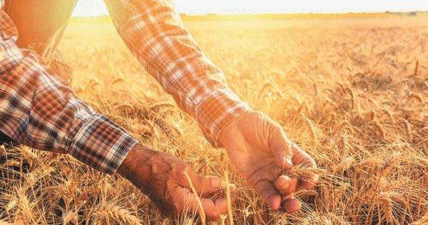 Vremea din ultima perioadă a dus la întârzierea cu până la 14 zile a campaniilor de recoltare